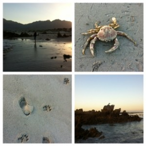 Every time I visit Pringle Bay Beach I see something new around me and in myself,
