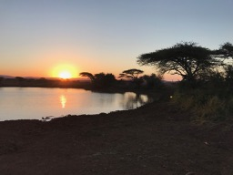 Visit Thanda Safari near Durban for luxury safari and first-hand rhino conservation
